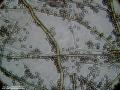 Lycoperdon umbrinum